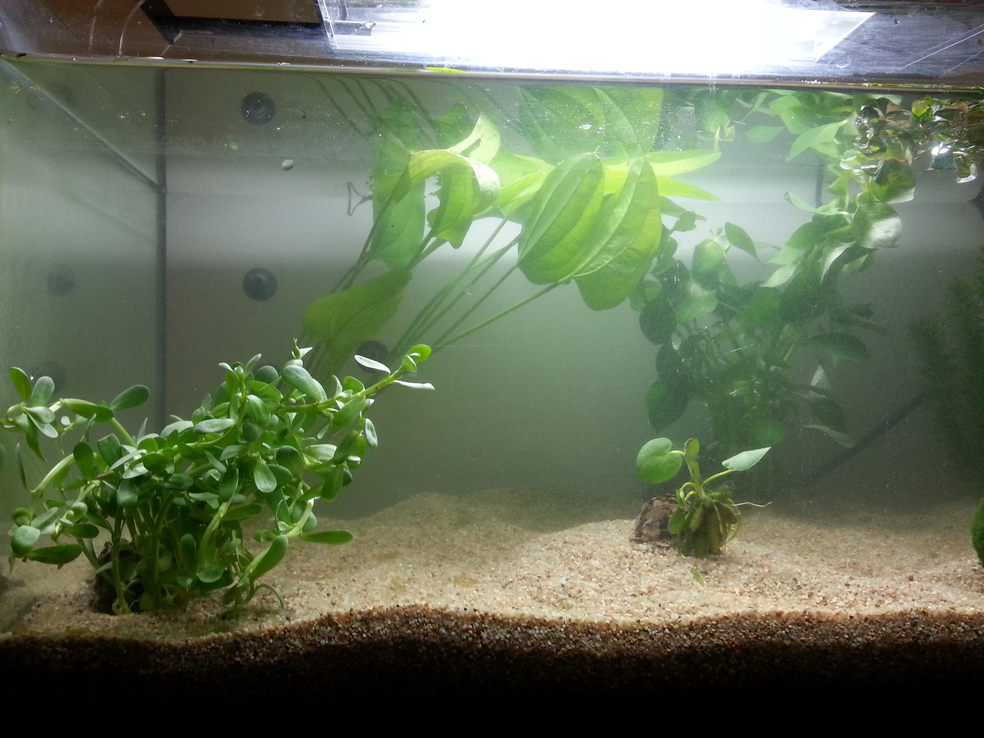plante dans un aquarium 69043220130613003124