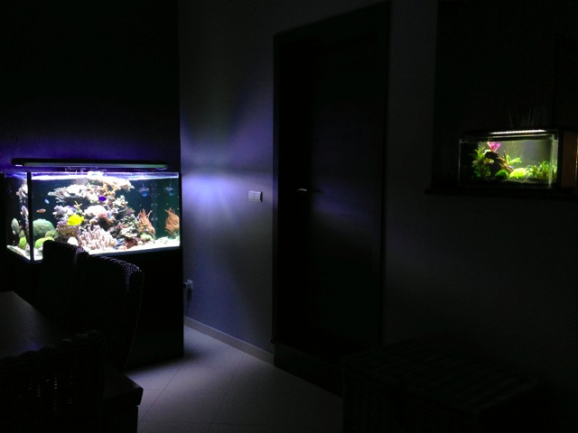Mon SuperFish Home 25 691842IMG0046