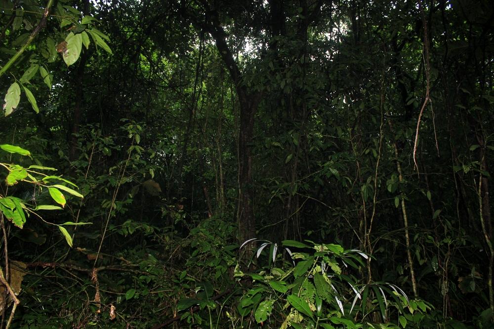 15 jours dans la jungle du Costa Rica 693450tortu4