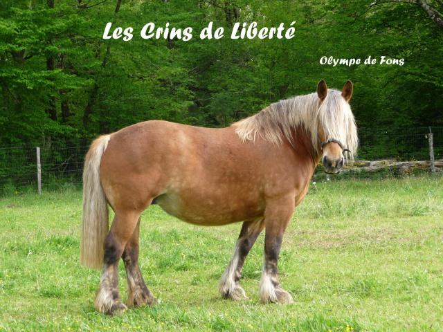 Dept 19 OLYMPE DE FONS (Bretonx Comtois) partie rejoindre les étoiles !!! 693657Olympe