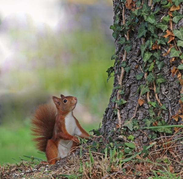 Mes petits copains écureuils. 699632re7855