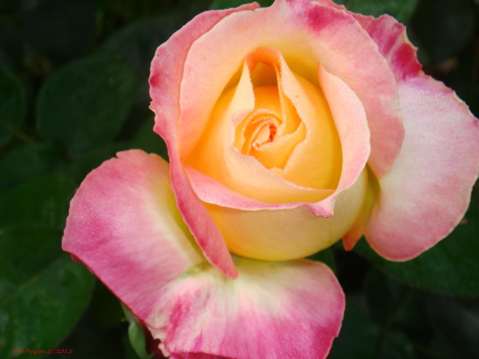 [Fil Ouvert] Fleurs 704922DSC07974