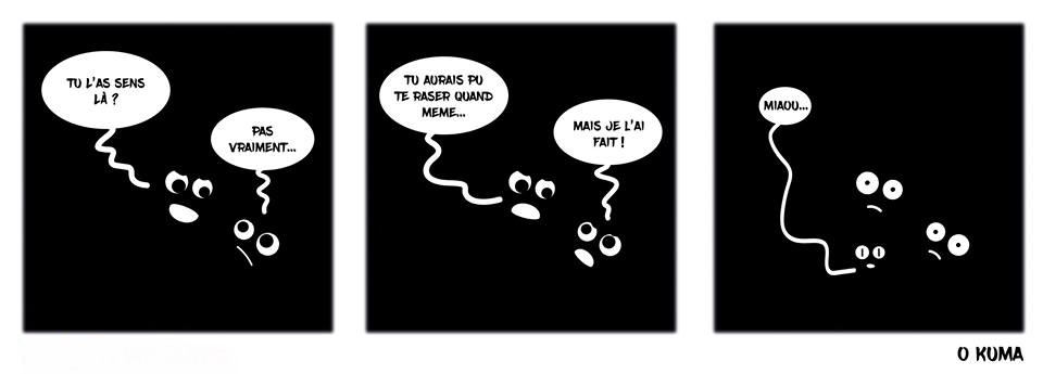HUMOUR - blagues - Page 17 705667Miaou