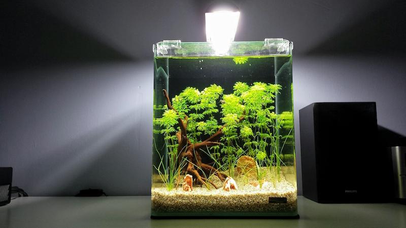 20 litres Naturel / Low tech / Sable et éclairage seulement 70573520160326162403