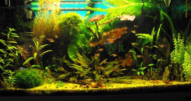 mes aquariums 707457120L