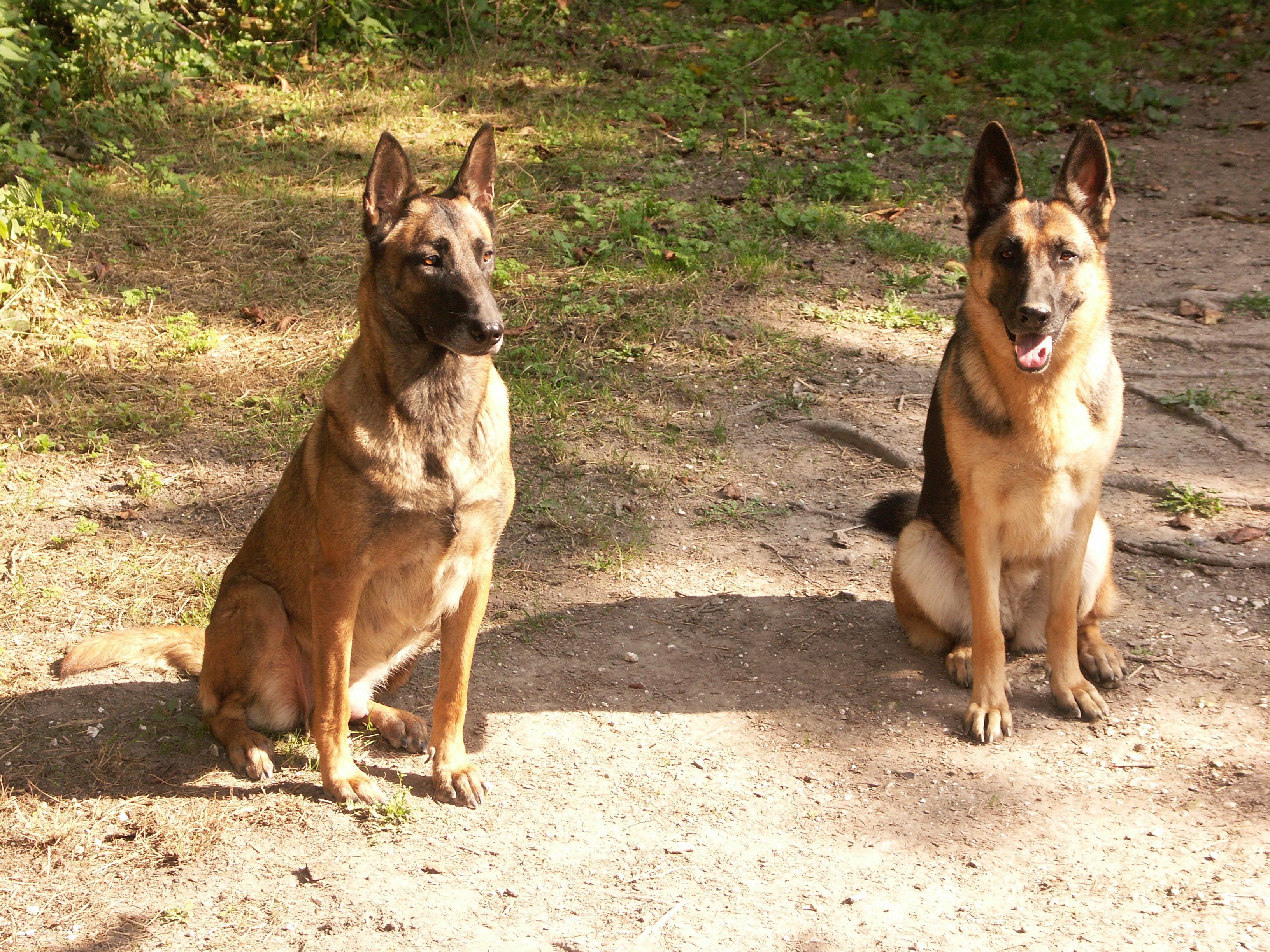 mes deux chiennes vont mourir... - Page 4 70788920060907007VelennesScaryUlna