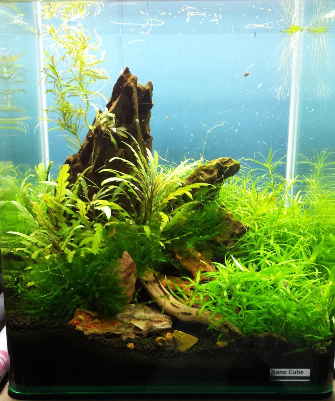 Mes bacs, une passion: l'aquariophilie!! 709199201306232251551