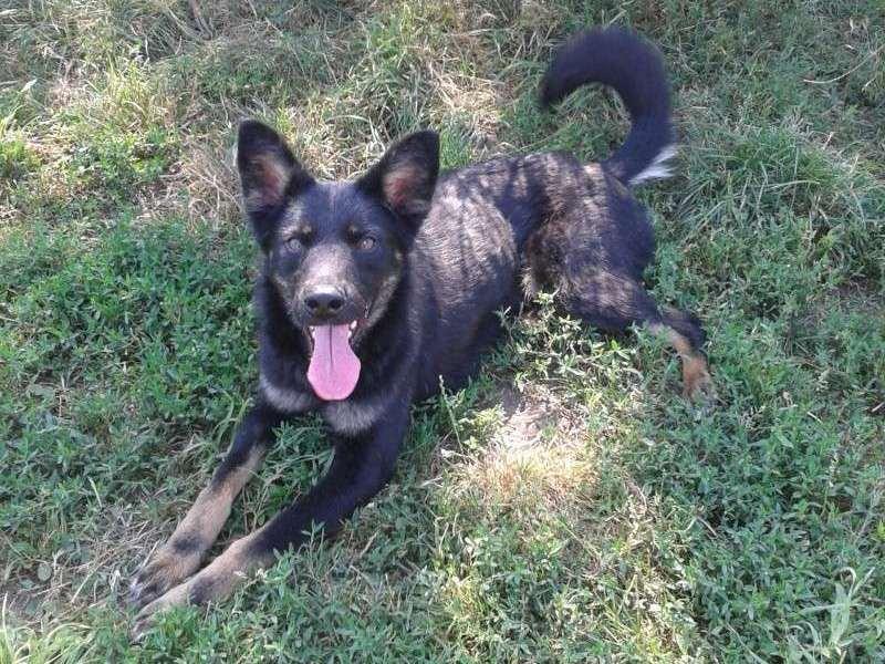 > Mika, un amour de petite chienne, née en mai 2011 - Adoptée 7191832012018