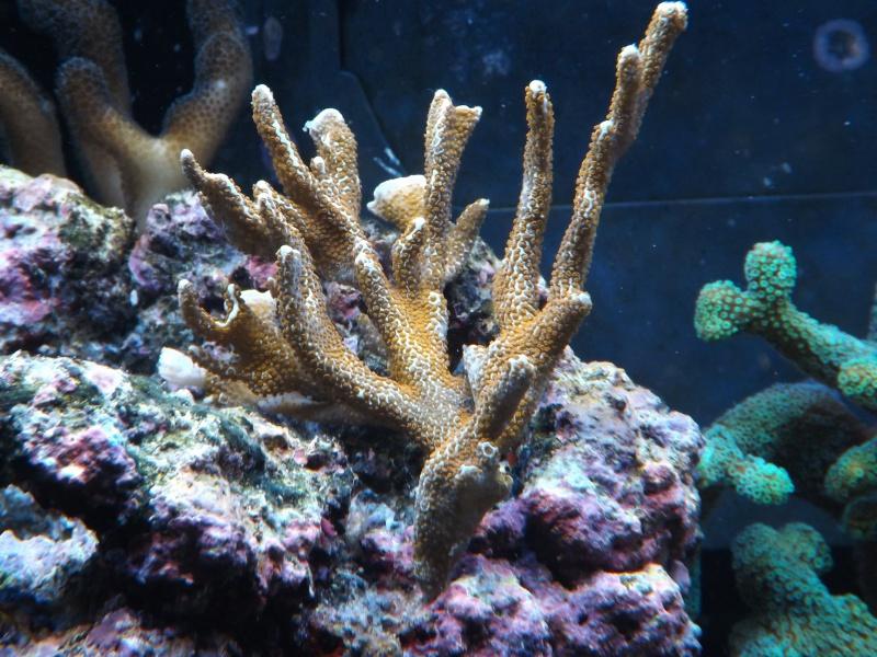 Astra47's Reef >Rsm250 noir - Page 2 726073DSCF1733