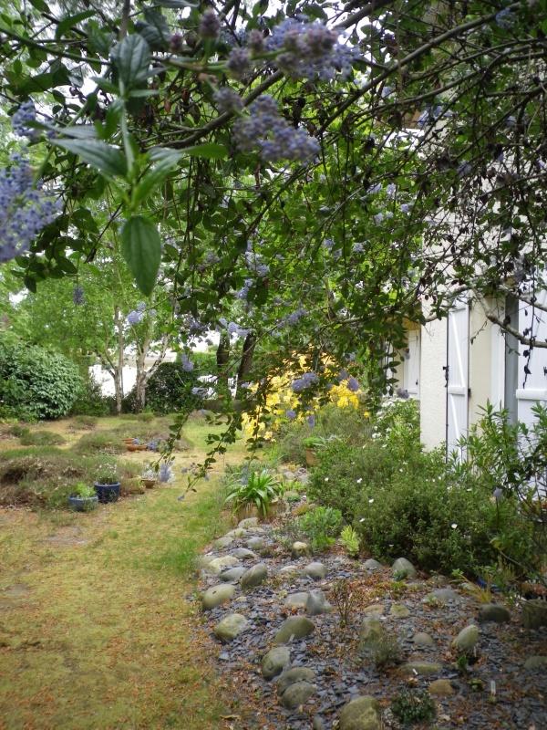 joli mois de mai, le jardin fait à son gré 729328IMGP4502