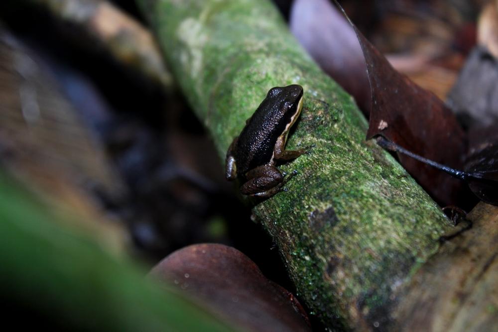 15 jours dans la jungle du Costa Rica - Page 2 729683rocketr