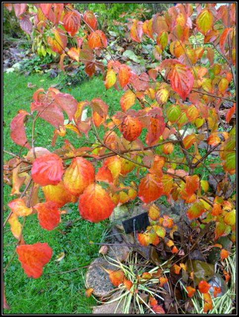 l'automne arrive... - Page 5 729896tuxpicom1415214272