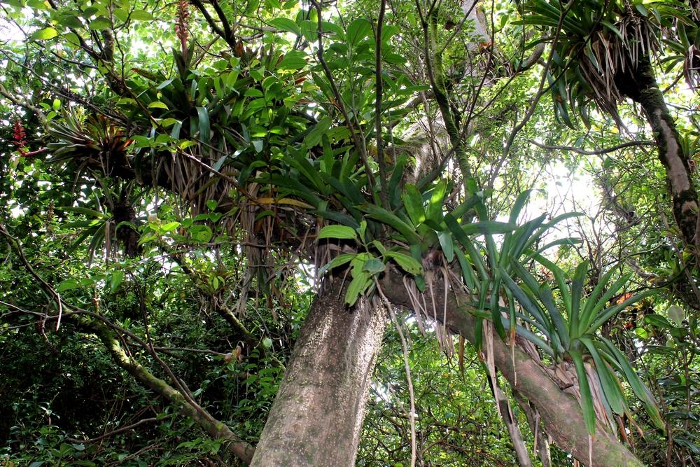 15 jours dans la jungle du Costa Rica - Page 2 731784poas8r