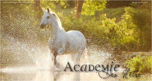 L'académie des Hêtres