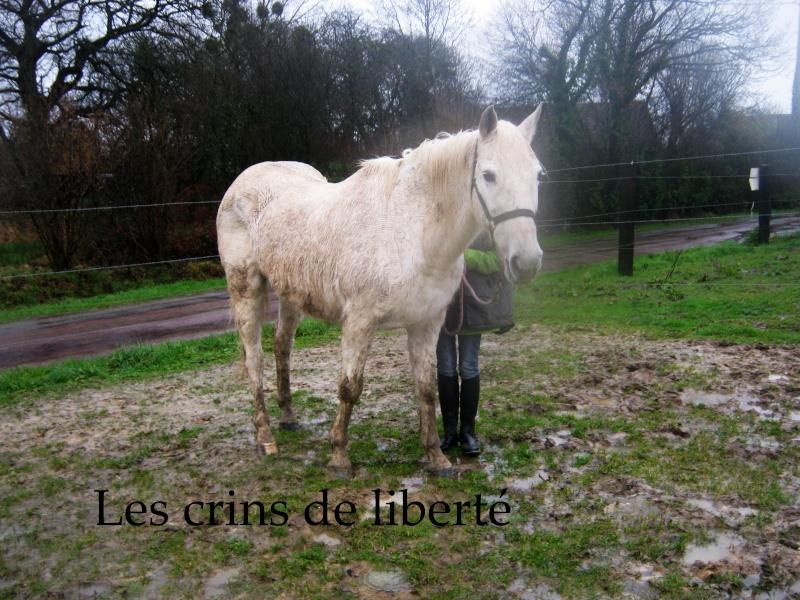 (Dpt 50) Linotte des Islots (Niagara), ONC Selle, Sauvée par Tania (février 2013)décédée - Page 2 73911402110