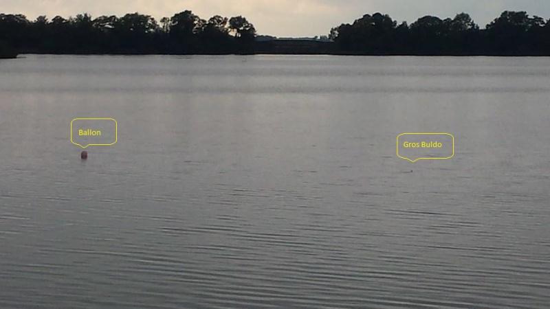 méthode de pêche: brochet au ballon - Page 3 740085137883914084504493854171960776560n