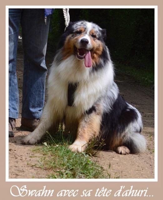 Vos chiens et leurs harnais! Photo  - Page 3 740873harnai