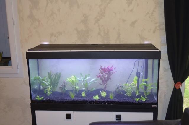 les 1er pas de mon aquarium  de 240 l 743209DSC0242