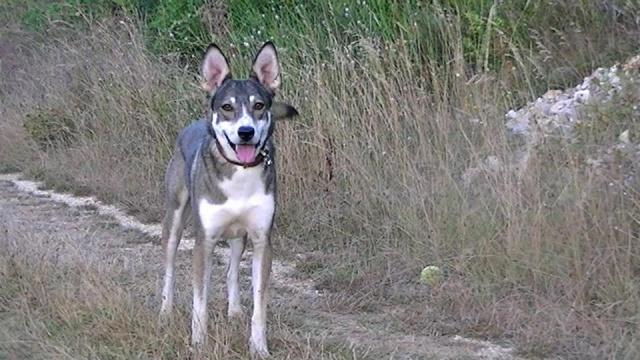 Photo de nos chiens batards! 7466294883761298771704907851446997505n