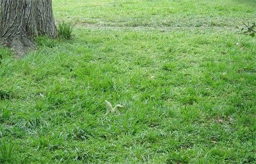 نباتات وأعشاب بلادي 756451164248483560131697844140147459n