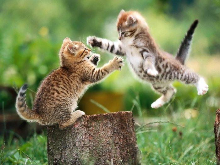 Et si les membres étaient des chats ? o.O 757137Luplup11