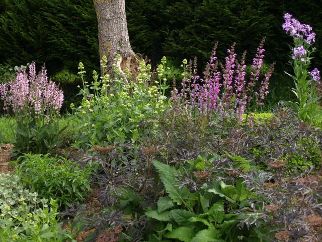 le joli mois de mai des fous jardiniers - Page 6 759529P5066303