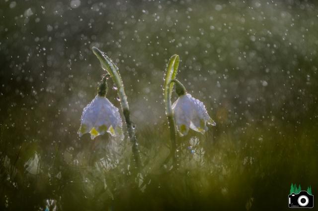 Je n'aime que toi petite fleur des champs... 759860IMG0045f11