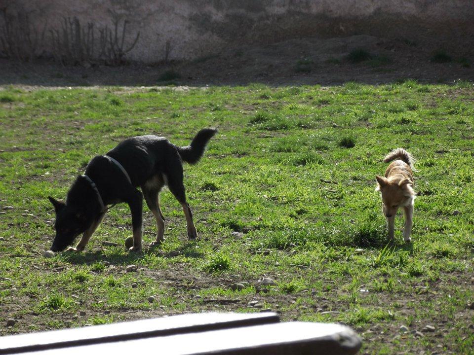 > Mika, un amour de petite chienne, née en mai 2011 - Adoptée 7637885343993418903226875708004474n