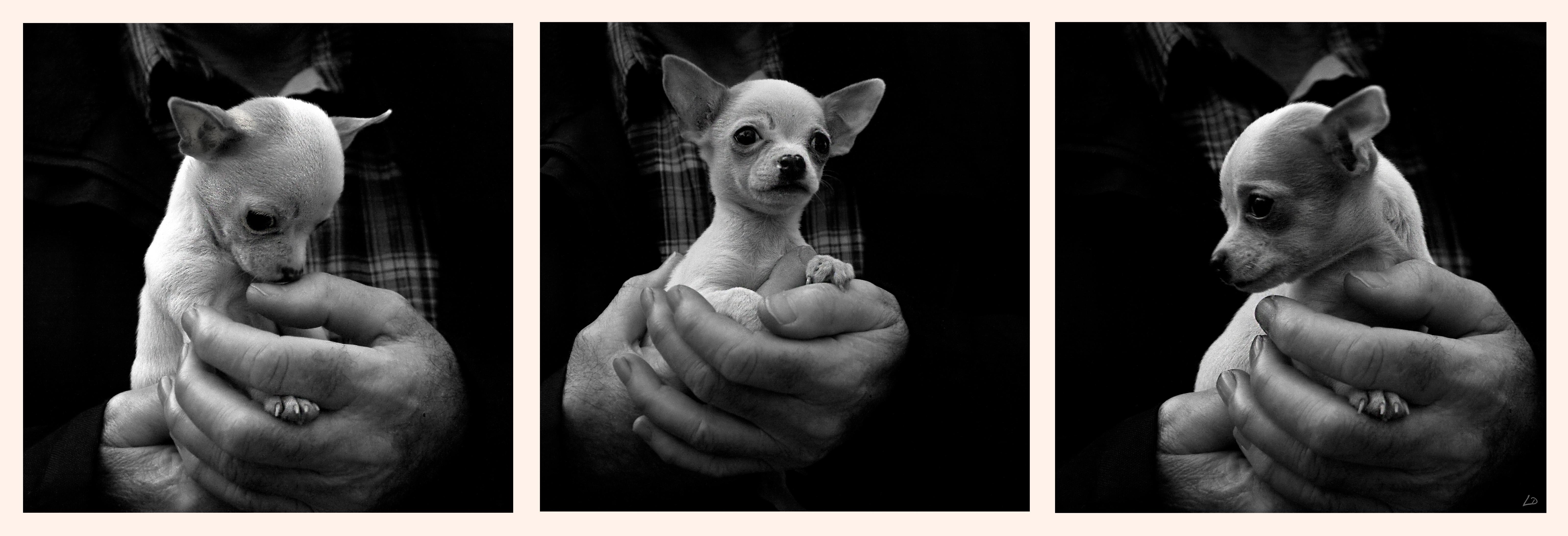 Triptyque canin. 764052tryptiquechien