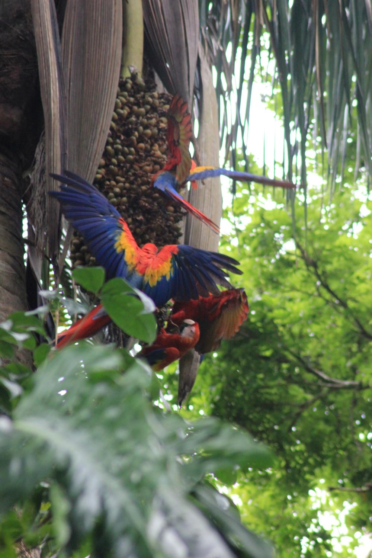 15 jours dans la jungle du Costa Rica 766063ara3r