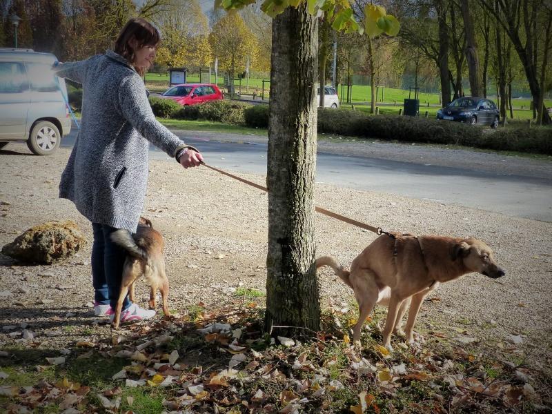 Tzupy, chien de notre quartier, mâle très sociable, né en 2009. 766233P1130396