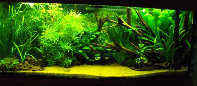 mes aquariums 767830240L