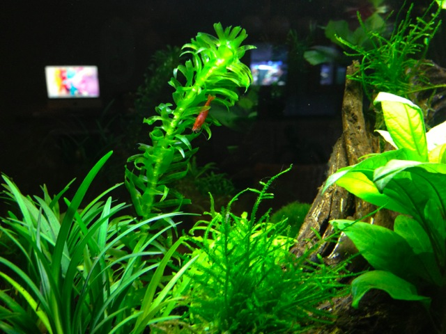 Mon SuperFish Home 25 768299IMG0107