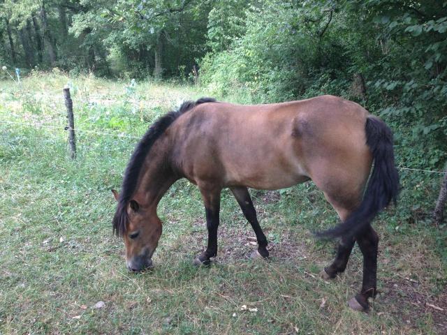 (Dep 63) HOLIDAY (dcd) et VIOLETTE, ponettes sauvées par Sonia R !!! (Fév et août 2012) 770148IMG1340