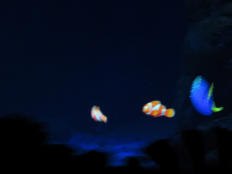 Walt Disney World + Universal Studios + Sea World + Busch Gardens Summer 2014 778541IMG0252