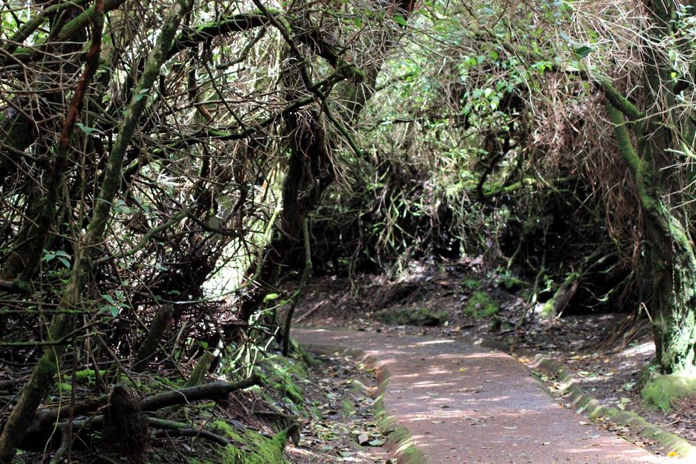 15 jours dans la jungle du Costa Rica - Page 2 783883poas5r