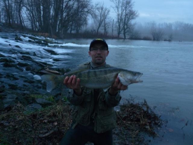 Janvier 2016,du poisson pour les SCRistes????? 7967292121002