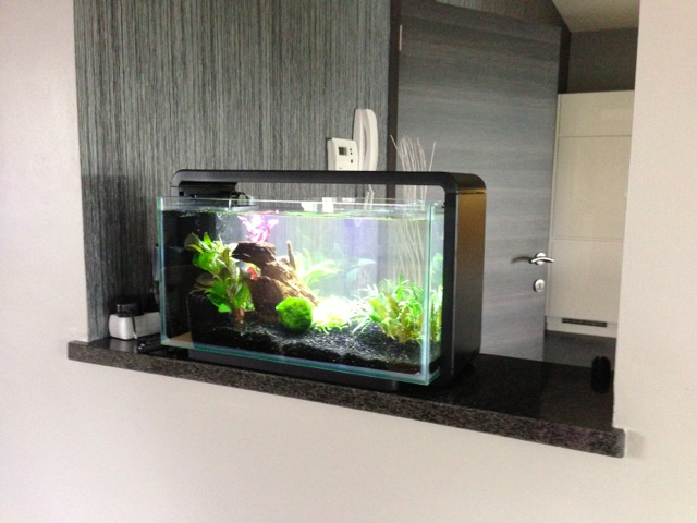 Mon SuperFish Home 25 798218IMG0042
