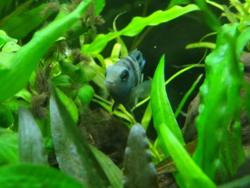 Ma Fish'étagère et les autres  - Page 3 798897DSC06963