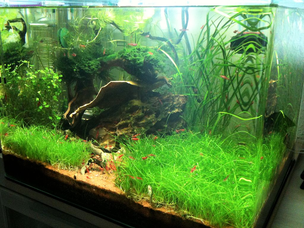 Mon Scaper's Tank 50L Aquascaping - Page 3 805112IMG0935