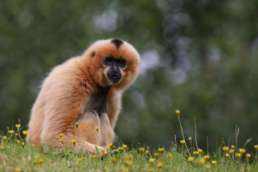 Sortie au Zoo d'Olmen (à côté de Hasselt) le samedi 14 juillet : Les photos 8063370801900