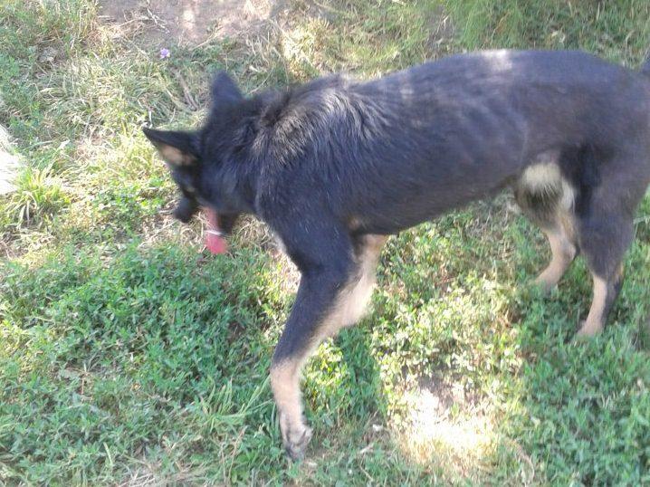 > Mika, un amour de petite chienne, née en mai 2011 - Adoptée 81186628juillet20121