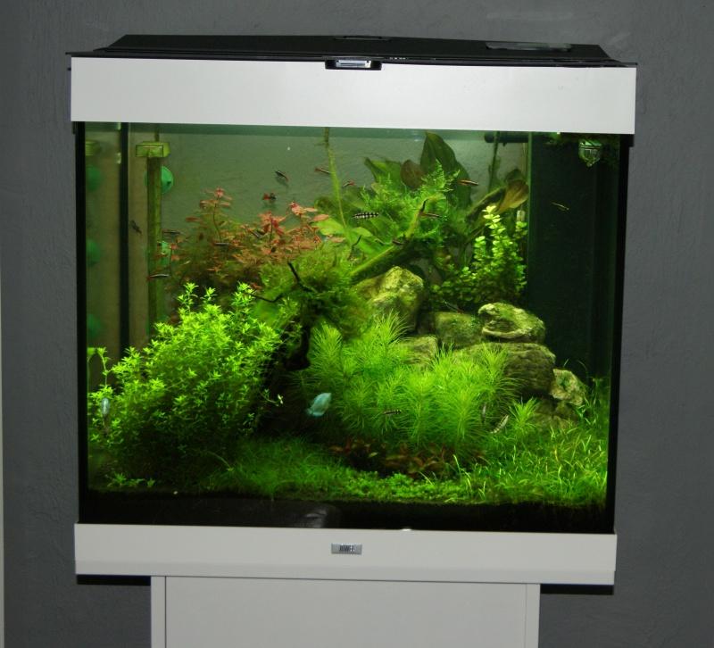 Juwel Lido 200 (Asiatique) - Daytime LED 80w - JBL i1501 - Page 4 81514620150225