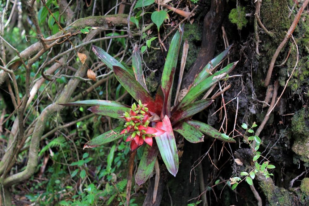 15 jours dans la jungle du Costa Rica - Page 2 815287poas6r