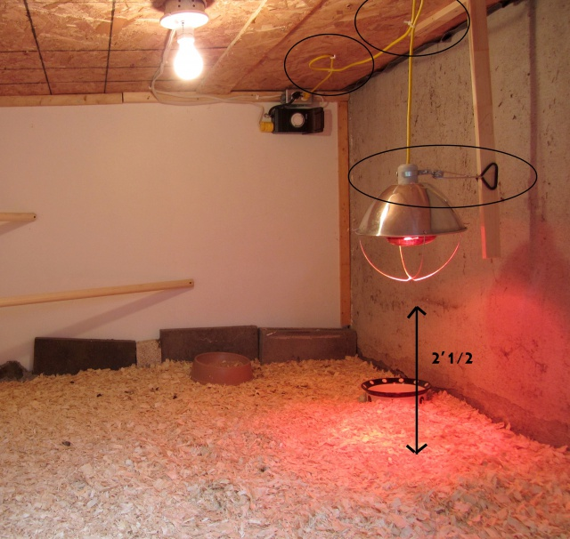 Hauteur de la lampe dansle poulailler 815430IMG2016