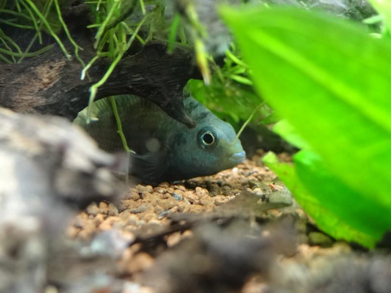 Ma Fish'étagère et les autres  - Page 3 827279DSC06966