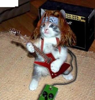 Et si les membres étaient des chats ? o.O 828148Luplup3