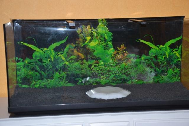 Je vous présente mon aquarium! =D 829412DSC0209