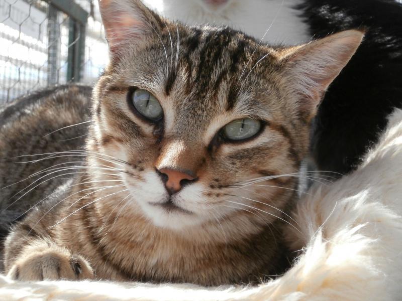 MELBOURNE (chaton tigré marron) 835405P4152543