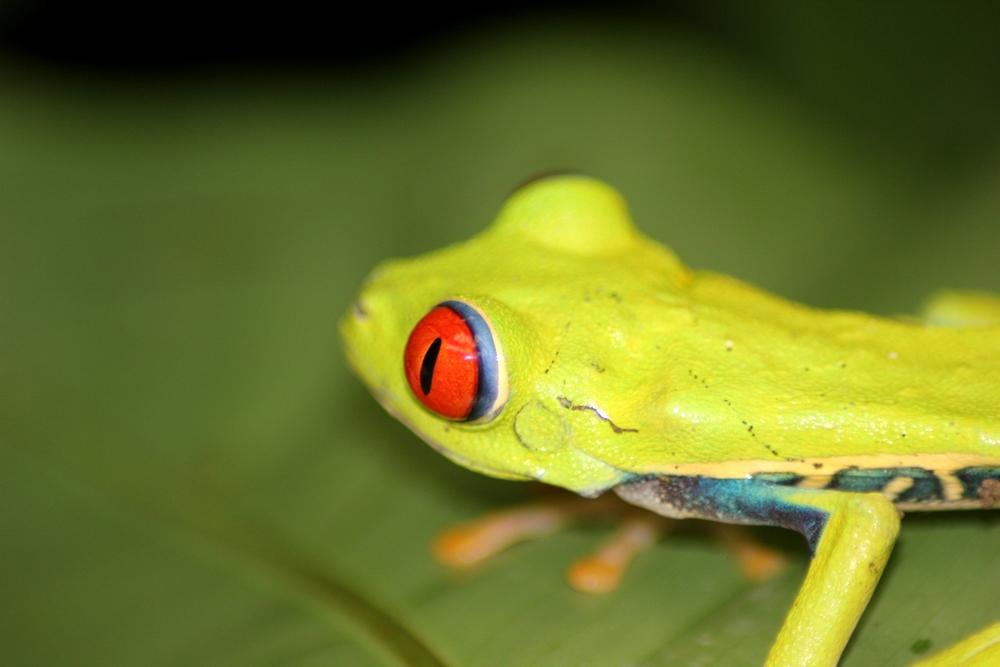 15 jours dans la jungle du Costa Rica - Page 2 838745aga6r